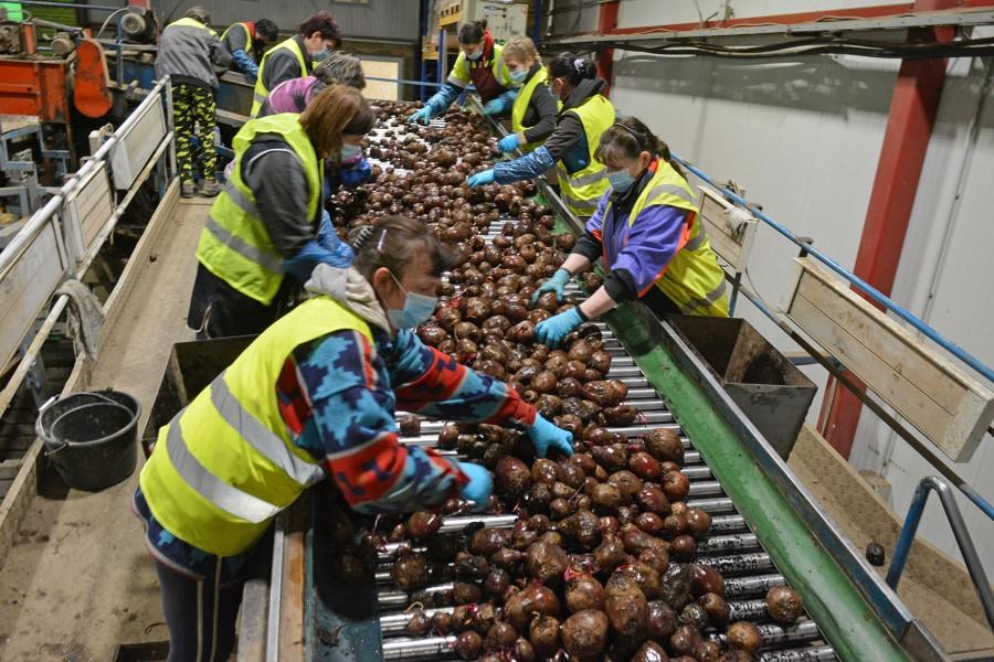 ES parama – žemės ūkio produktų perdirbėjams