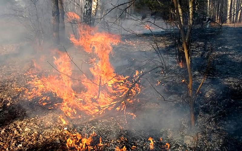 Dėl  gaisrų pavojaus uždrausta lankytis miškuose